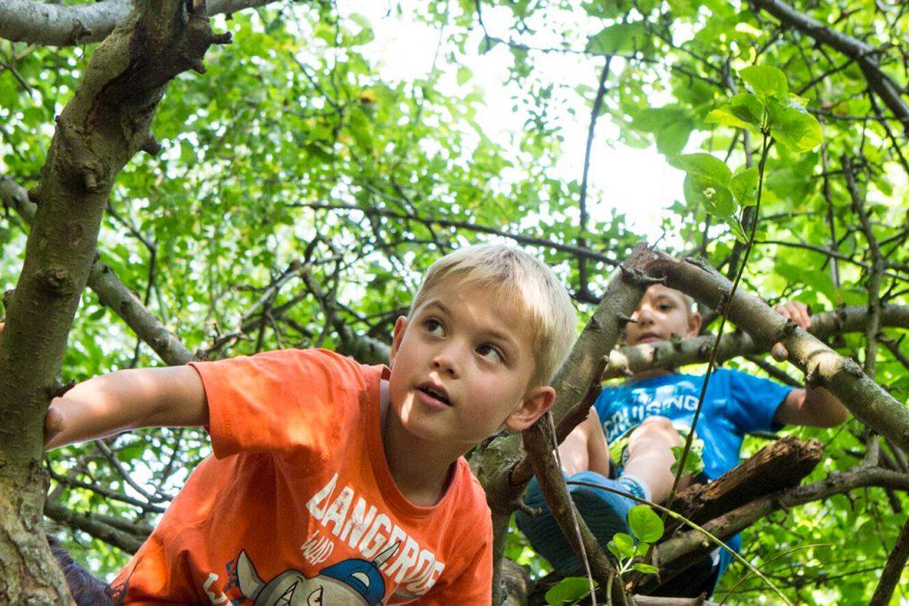Zwei Jungen klettern in Baum